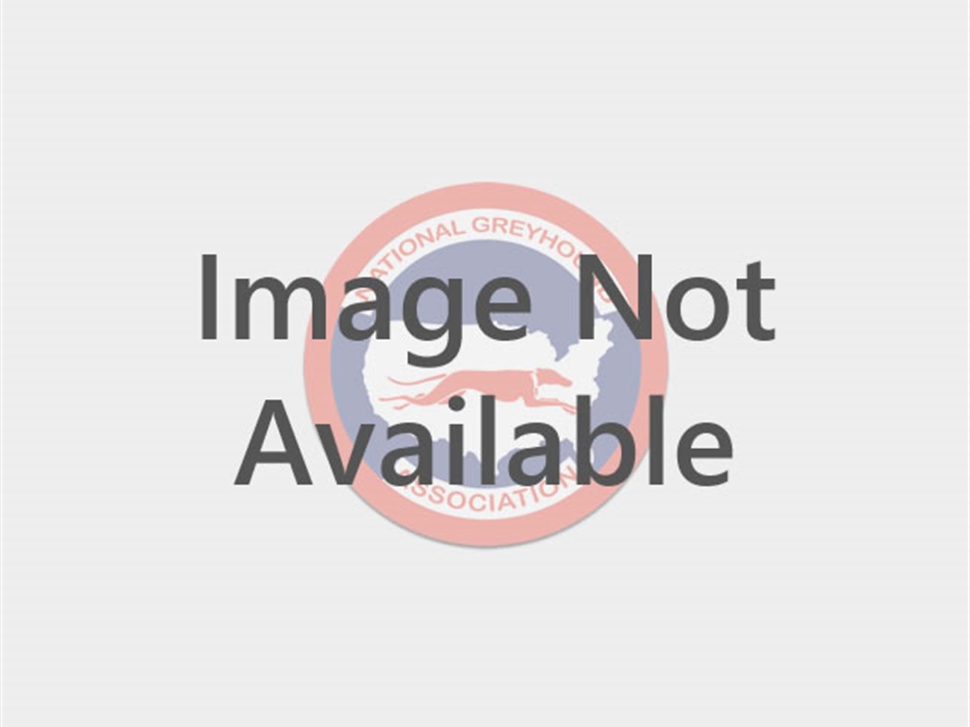 National Greyhound Association